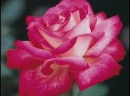 любовь и женственность против болезни Бехтерева
